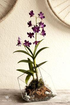 Wabi-Sabi Ateliê | Terrário com Orquídea (www.wabisabiatelie.com)