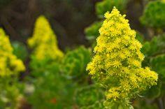 Flores Amarillas | #Flor #Flower