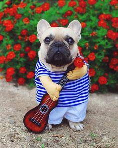 -21.10.2017- ------------- Yes Ma'am I take requests #monsieurpotato #andhisflower . . 네 신청곡 받습니다 . . . #busker #frenchman #busking #toocute #buhi #streetmusic #cutiepie #fawn #guitarist #귀요미 #ukulele #weekendvibes #puppylove #adorbs #saturdaymotivation #handsomeaf #halloween #stripes #cuteaf #halloweencostume #ootd #lol #cutiepatootie #フレンチブルドッグ #colorfull #livemusic