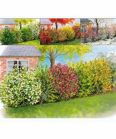 Vier-Jahreszeiten-Hecke | Bäume & Sträucher | Bakker