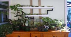 How To Make Your Own Mini Aquaponics System For Less Than $50