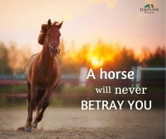 A horse will never betray you.