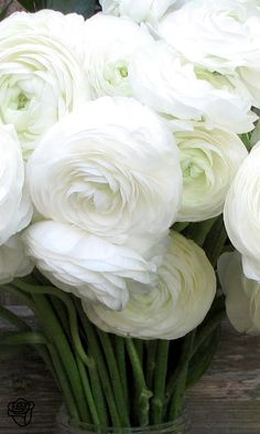 All white. Ranunculus