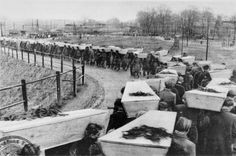 Picture of the funeral for inmates of Auschwitz who could not be saved or were killed by the SS as the liberating Soviet army approached.  The line of coffins seems to stretch to infinity.