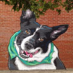 by Mr Prvrt for Verona Street Animal Society, a not-for-profit that assists Rochester Animal Services. Awesome! Adopt! Adopt!