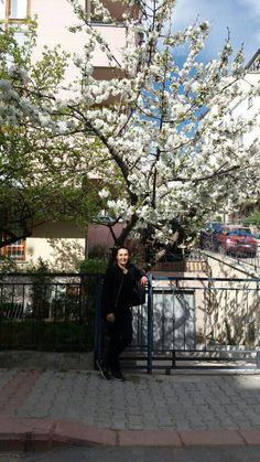 Ankara da bahar