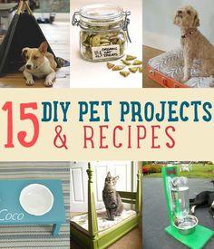 15 pet projects and recipes for pet treats. Love pets? So does DIYReady.com | diyready.com\/diy-pet-projects-recipes\/
