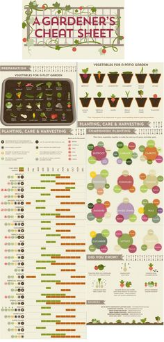 "This garden ""cheat sheet"" graphic shows you what to plant, where to plant it, and when."