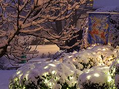 I love Christmas lights on snow covered bushes!