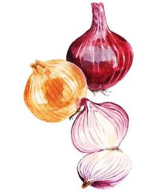 The One Surprising Ingredient This Professional Chef Cannot Live Without — Real Simple Onion Drawing, Potato Drawing, Food Drawing, Fruit And Veg, Fruits And Vegetables, Veggies, How To Cut Onions, Vegetable Painting, Poetry Photos