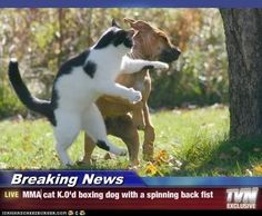 Breaking News - MMA cat K.O'd boxing dog with a spinning back fist ...
