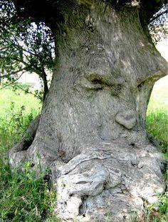 L'olivier Pensant – Italie