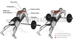 A compound shoulder exercise. Synergists: Lateral Deltoid Infraspinatus Teres Minor Middle and Lower Trapezius Biceps Brachii Brachialis and Brachioradialis. Stabilizers: Upper T Best Shoulder Workout, Best Chest Workout, Chest Workouts, Good Back Workouts, Back Exercises, Shoulder Exercises, Workout To Lose Weight Fast, Weight Training Workouts, Bodybuilder