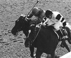 Affirmed -- ESPN Photo Wire - ESPN -- Winner of 1977 Triple Crown