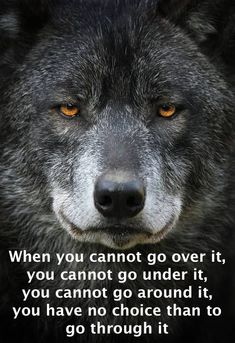 Wow now that's a very profound face! Such knowing eyes and so beautiful! Love a Wolf. You look mad though Wolf Images, Wolf Photos, Wolf Pictures, Wolf Love, Wolf Spirit, My Spirit Animal, Beautiful Wolves, Animals Beautiful, Wolf Husky
