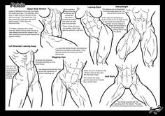 Tutorial: Pelvis + Butts 1 by Bambs79 Muscular female anatomy comic or anatomical illustration female muscle growth buff bodybuilding