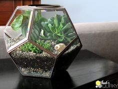 Clever Recycle / Upcycle: pentagon shaped light fixture turned into a succulent terrarium