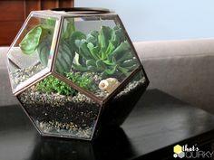 LOVE: DIY Succulent Terrarium on ThatsQuirky.com