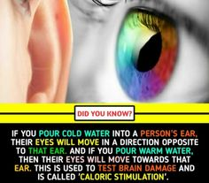 Wierd Facts, Wow Facts, Real Facts, Wtf Fun Facts, True Facts, Funny Facts, Amazing Science Facts, Some Amazing Facts, Unbelievable Facts