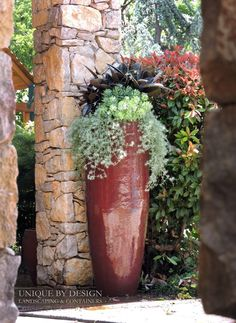 Black Ficus, Thundercloud sedum and Lotus vine. l #UniquebyDesignLandscape