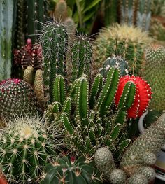 Cactus Garden created with love.