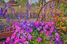 Country Summer Fine Art Print or Greeting Card