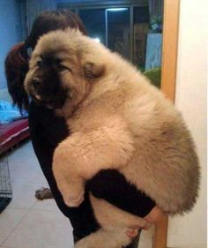 Big Teddy Bear Doggy