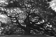 Angel Oak by Christine Juppa on 500px