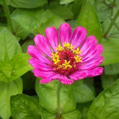 La belleza se esconde en cualquier lugar incluso en un miércoles esta belleza nos acompaña a saludar a la mitad de la semana desde #lahechicera en #merida  #yerbabuena  #hechoenvenezuela #hechoenmerida #Venezuela #flower #flores #colors #miercoles #meriland #microgreens