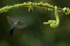 GDT Nature Photograph Winners