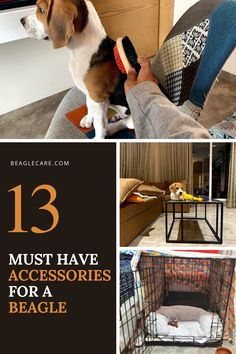 Here is a list of 13 accessories that every Beagle Parent should have. Puppy Schedule, Puppy Training Schedule, Puppy Training Classes, Dog Training, Training Pads, Training Videos, Baby Beagle, Beagle Puppy, Pets