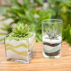 We're mesmorized by the abstract sand patterns these succulents are buried in! ♥️ Beautiful little treasures for your home! Succulent Centerpieces, Succulent Arrangements, Cacti And Succulents, Planting Succulents, Planting Flowers, Air Plant Terrarium, Garden Terrarium, Succulent Gardening, Container Gardening