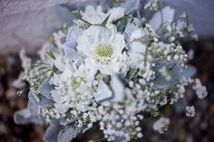 Dusty Miller, Misty Linolium, Baby's Breath