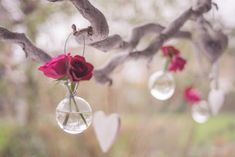Shallow Focus Photography of Clear Glass Hanging Decor With Two Red Roses · Free Stock Photo Party Hacks, Diy Party, Family Quotes Love, Valentine Crafts, Valentines Day, Saint Valentine, Valentine Ideas, Happy Week End, Love Is In The Air