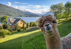 11 tips til unike bryllupsreiser i Norge Most Popular Image, Dere, Lofoten, High Quality Images, Most Beautiful Pictures, In The Heights, Camel, That Look, Island