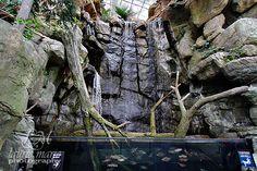 aquarium fall