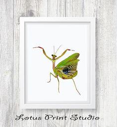 Praying Mantis Print Insect Photography Animal Wall Art
