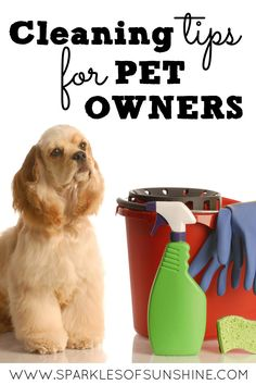 Just because you have pets doesn't mean you can't have a clean home. Check out these cleaning tips for pet owners.