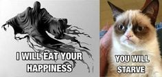 Ahahahahaha! This cat is priceless and I don't even like cats.