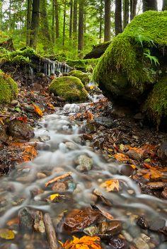Twin Falls Brook (North Bend, Washington) | by  Thorsten Scheuermann