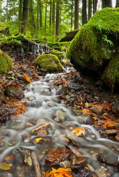 Twin Falls Brook by Thorsten Scheuermann