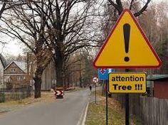 Pas op! overstekende boom!