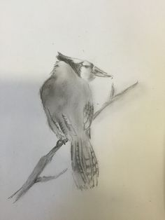 Drawing of a bird. Idea for painting