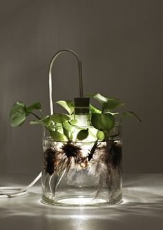 lamp and a  terrarium.