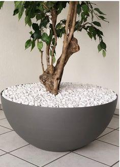 Randlose Schale, Randlose Baumschale Architecture, Florals, Garten