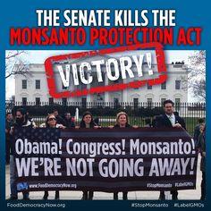 http://fooddemocracynow.org/blog/2013/sep/25/Breaking_senate_kills_Monsanto_Protection_Act/  BREAKING: Senator Mikulski kills the Monsanto Protection Act in the Senate!   www.commondreams.org/headline/2013/09/25-2