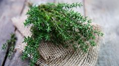 The Properties of Thyme - Holistic Health Herbalist Thyme Benefits, Thyme Herb, Visit Jamaica, Convenience Food, Healthy Tips, Healthy Choices, Albania, Natural Remedies, Herbs