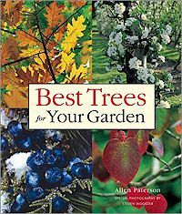 Fast Growing Trees in Florida   Garden Guides