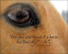 Horse Tear by Montana Horse Trailers