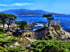 Lone Cypress along the 17-Mile Drive, Monterrey, CA